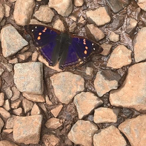 Placeres del alma - iguazú mariposa